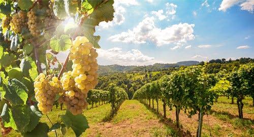 California Winery